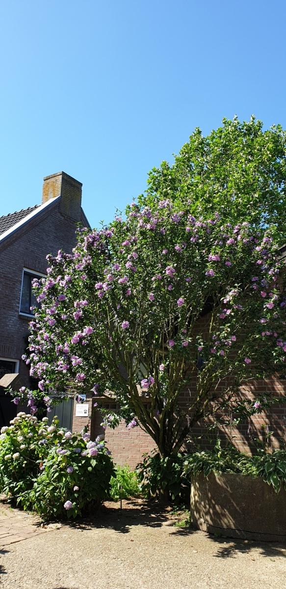 Prachtige boom in bloei